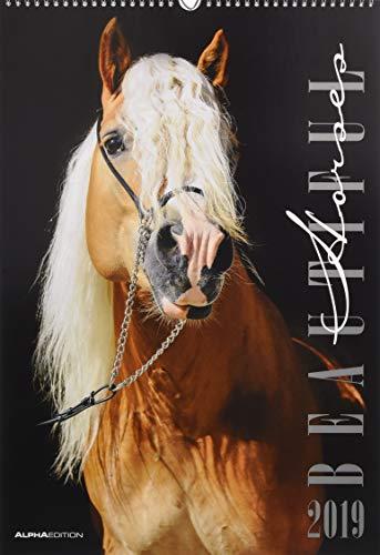 Beautiful Horses 2019 - Pferde - Bildkalender (34 x 50) - Tierkalender