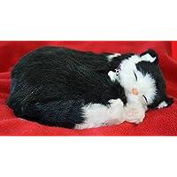 Breathable Black & White Kätzchen Companion Pet für Menschen mit Gedächtnisverlust vom Altern und Pflegepersonal preisvergleich bei billige-tabletten.eu
