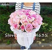 Vista Rare Fleur Rose/Rosas Graine Coloré Drôle Bonsaï Plante BRICOLAGE Maison Jardin Balcon Terrasse Plantation Haute Qualité Fleur 150 Pcs 10