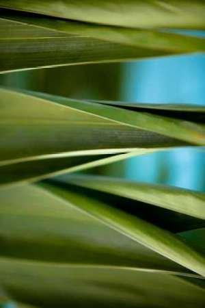 Palma III par Bryant, Susan -Imprimé beaux-arts sur toile -