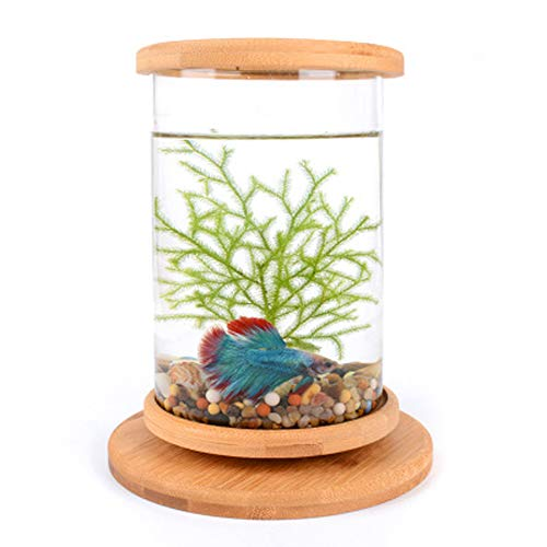 Beginner level Fish tank betta fish aquarium fish home desktop ecological bottle creative office tempered glass micro-cylinder rotating bedroom fish tank betta mini small fish tank