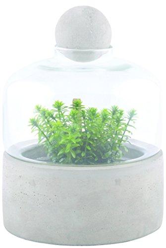 Esschert Design Anzuchtflasche Betonschale S aus Beton und Glas, 18,0 x 18,0 x 23,6 cm