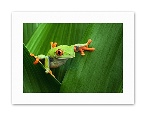 Wee Blue Coo LTD RED Eyed Tree Frog Climbing Leaf Picture Canvas Art Prints -
