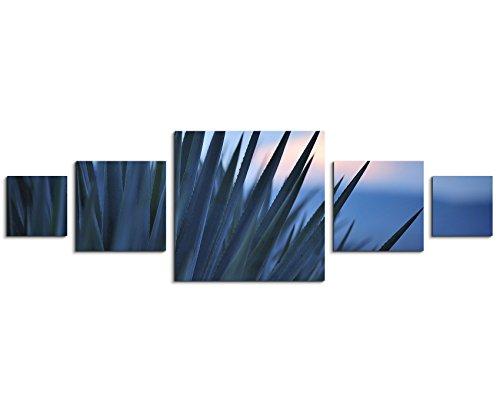 Wandbild 5 teilig 160x50cm - Naturfotografie - Sonnenaufgang über Einer Agave für Tequila Produktion (Tequila-agave, Eine Pflanze)