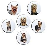 Merchandise for Fans Yorkshire Terrier Porträt - 6 große