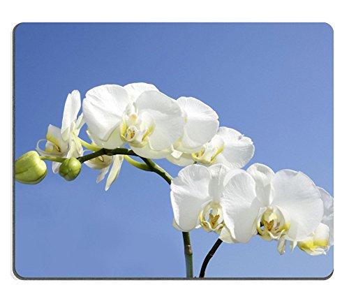 luxlady-caucho-natural-gaming-mousepads-hermosa-orqudea-blanca-en-azul-cielo-imagen-id-26270609