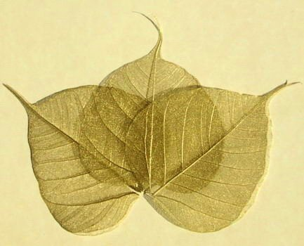 large-gold-skeleton-leaves-pack-of-100-approx-4-10cm-ideal-for-crafting-card-making-gift-tags-scrapb