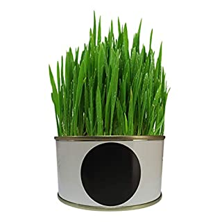 XIYAO Organic Cat Grass Growing Kit with Organic Seed Mix, Great Gift for Pet Master Lazy Set