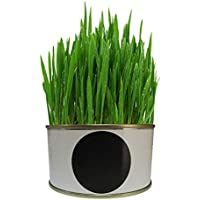 XIYAO Organic Cat Grass Growing Kit mit Bio-Saatgutmischung, tolles Geschenk für Pet Master Lazy Set