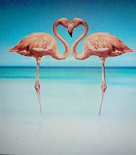 agskarte mit zwei Flamingos tropisches Wasser ()