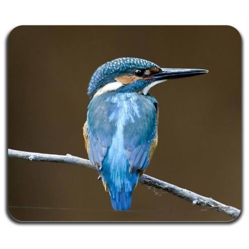 blue-fabulous-bird-lovely-nature-cheerful-animals-cute-mouse-pad-washable