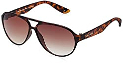 Joe Black Aviator Sunglasses (Tortoise)(JB-705-C4|59)