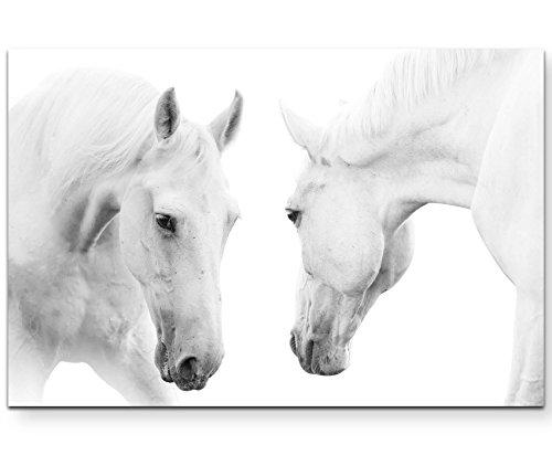 Paul Sinus Art Leinwandbilder | Bilder Leinwand 120x80cm Zwei Stolze weiße Pferde
