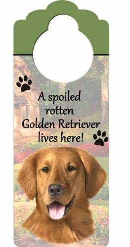 E&S Pets Golden Retriever Holz Zeichen A Spoiled Rotten Golden Retriever Lives Here mit kunstvollen Foto á 10von 10,2cm kann auf Türen oder überall aufgehängt werden in Home (Bird Retriever Dog)