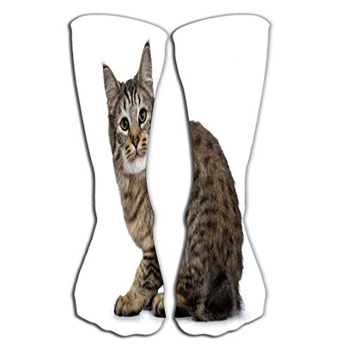 AHENANY Outdoor Sports Men Women High Socks Stocking pixie bob cat kitten sitting side ways isolated white background looking very curious naughty lens purebred cats Tile length 19.7