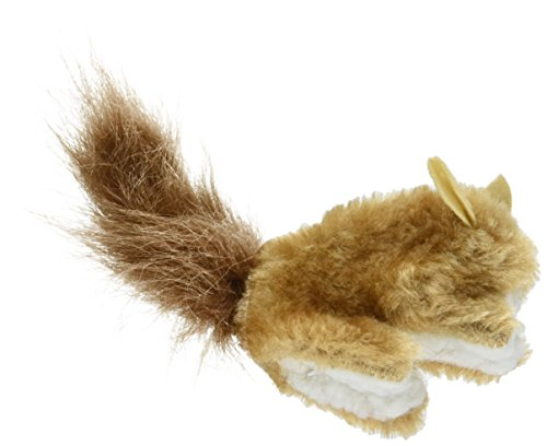 Kong Katze Eichhörnchen -