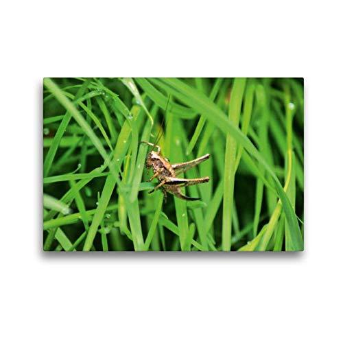 Calvendo Premium Textil-Leinwand 45 cm x 30 cm quer Heuschrecke   Wandbild, Bild auf Keilrahmen, Fertigbild auf echter Leinwand, Leinwanddruck: Insekten Tiere Tiere -