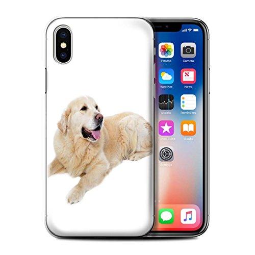 Stuff4 Hülle / Hülle für Apple iPhone 5/5S / Airedale Terrier Muster / Hund/Hunde Kollektion Labrador