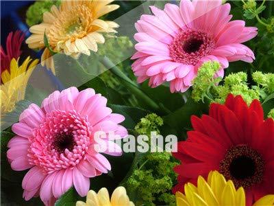 50pcs / pack, gerbera fiore mix flores, semi per la casa giardino e balcone, facile da coltivare, per amici: 3