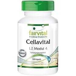 Fairvital - Cellavital - 120 cápsulas vegetarianas con acetil-L-carnitina, taurina, ácido alfa-lipoico y coenzima Q10