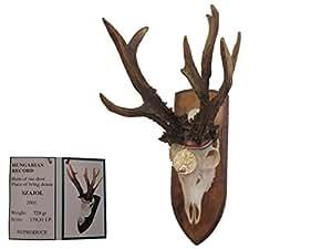 REKORD rehbock copie rehgeweih trophée de chasse
