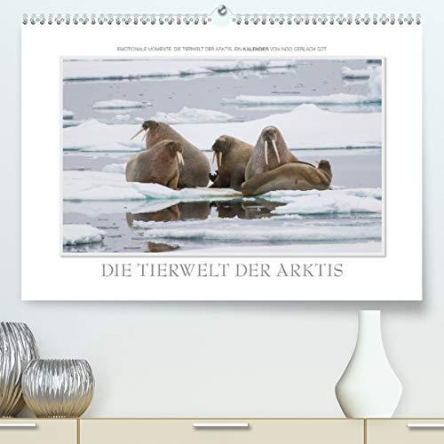 Calvendo Premium Kalender Emotionale Momente: Die Tierwelt der Arktis/CH-Version: Traumhafte Bilder der Tierwelt in Europas Arktis. (hochwertiger DIN A2 Wandkalender 2020, Kunstdruck in Hochglanz)