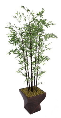 Laura Ashley 208,3 cm hoch schwarz Bambus Baum in 43,2 cm Fiberstone Blumentopf