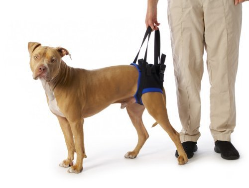 walkabout-back-pet-harness-medium-by-walkabout-harnesses