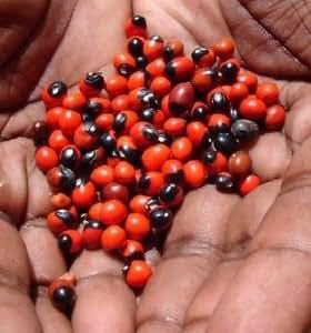 Takething Red Gunja or Lal Gunja