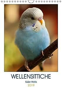WELLENSITTICHE - Süße Wellis (Wandkalender 2019 DIN A4 hoch): Ein neues Jahr - ein neuer Kalender! Für Wellensittich-Liebhaber gibt es keine ... 14 Seiten (CALVENDO Tiere)