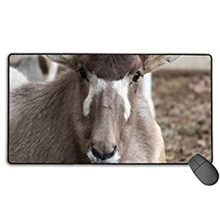 Gameiiak Addax Close Large Gaming Mouse Mat