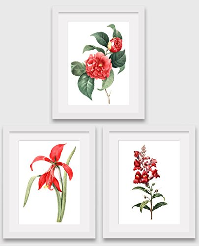 set-of-3-botanical-prints-red-camellia-amaryllis-snapdragon-flowers-8-x-10-inches-unframed
