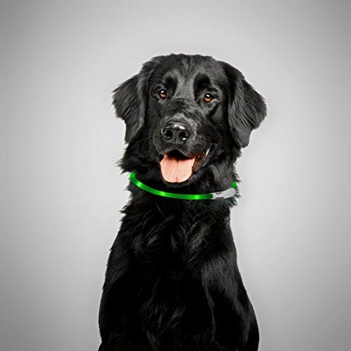 PRECORN LED USB Halsband Silikon Hundehalsband Leuchthalsband für Hunde aufladbar per USB (Größe S-L auf 18-65 cm individuell kürzbar) in grün - 3