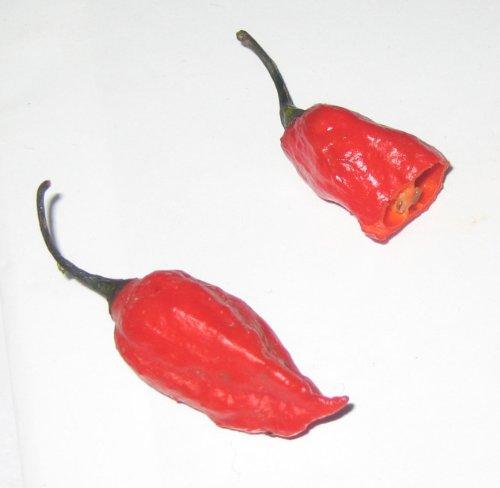 Asklepios-seeds® - 250 graines Bhut (Naga) Jolokia - Ghost Chili - piment 'Bhut Jolokia'