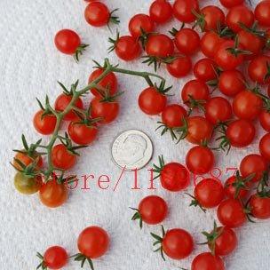 "200 Tomatensamen Seltene Mini-Climbing Tomatensamen, ""Kirschtomaten – sweet 200"", Mini Tomato Bonsai Pflanzensamen, Bio-Lebensmittel"