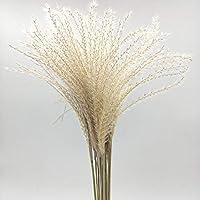 Natürliche getrocknete Blumen 50 Stück natürliche Reed Blume getrocknete Blume Reed getrocknete Blume Weizen Ohr getrocknete Blume Fuchsschwanz natürliche Reed Blume Dekoration Prop