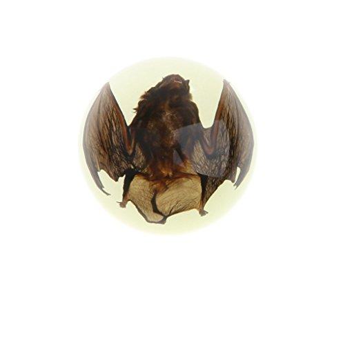 Baoblaze Kuppel Briefbeschwerer mit echtem Insekte, eingebettet in glasklarem Kunstharz, Geschenk für Kinder und Erwachsene - Fledermaus - Dunkeln leuchten