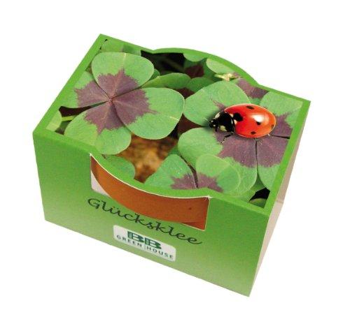 Minipflanzset Glücksklee