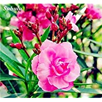 VISTARIC 6 20 Pz Bonsai Fiori Amaranthus Tricolour Semi Poinsettia Amaranto Tasso Di
