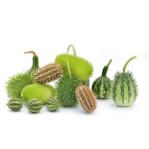 Preisvergleich Produktbild Kürbisplanet Ziergurken-Mischung - 14 Gurken - 7 Sorten - geschmackvoll als Dekoration im Herbst und Winter - für Hervorragende Halloween-Deko - Dekokürbisse