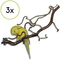 3 verschnörkelte Korkenzieherhasel Action Sitzstangen - das perfekte Vogelzubehör für Ihren Vogelkäfig