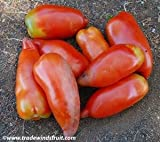 Jersey Devil Tomato Seeds - 5+ Rare Seeds + FREE Bonus 6 Variety Seed Pack - a $29.95 Value! Packed in FROZEN SEED CAPSULES for Growing Seeds Now or Saving Seeds For Years