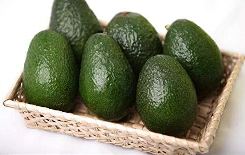 geoponics semi: avocado semi gre frutto molto delicious persea una pera seme facile da coltivare semi di frutta per la casa gard 10 pezzi: 7