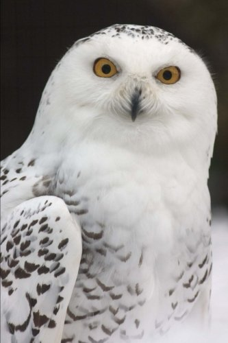 White Snowy Owl Bird Journal