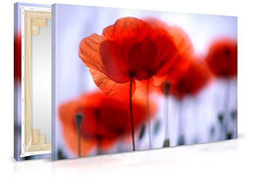 Leinwandbild Red Poppy