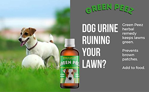 Green Peez dog urine grass patch repair neutralises burn marks on lawn 4