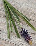 artplants - Künstliche Hyazinthe MAIRA, lila, 35 cm - Deko Traubenhyazinthen Pflanze / Kunstblume