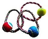 Tennisball mit einem Seil–Spielzeug für Hunde