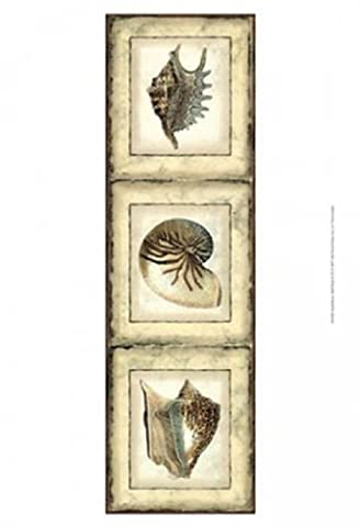 Vision studio – Small Rustic Shell Panel II Fine Art Print (24.13 x 33.02 cm)