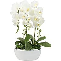 Suchergebnis Auf Amazon De Fur Ubertopfe Orchideen Weiss Kuche